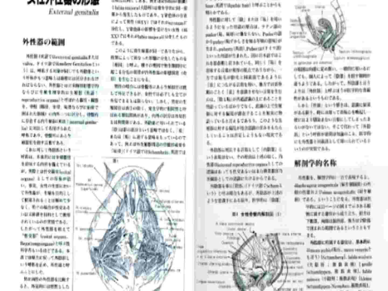 日本女性の外性器① 0 | 0  102連発 27